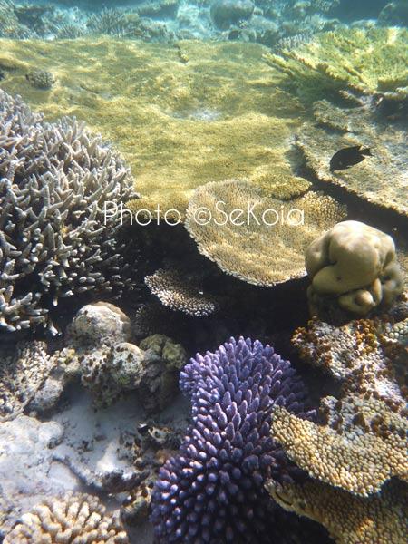 ©sekoia-coraux-ocean-indien-021