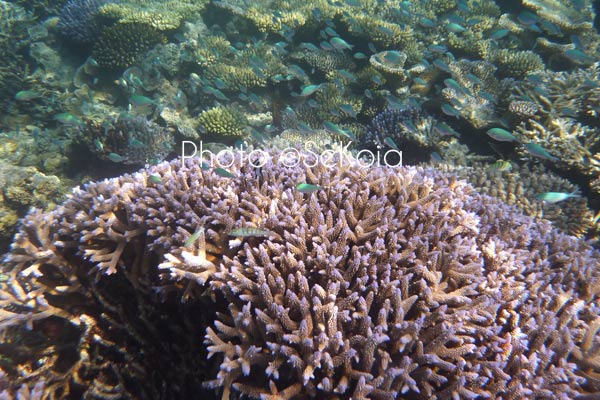 ©sekoia-coraux-ocean-indien-024