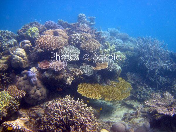 ©sekoia-coraux-ocean-indien-025