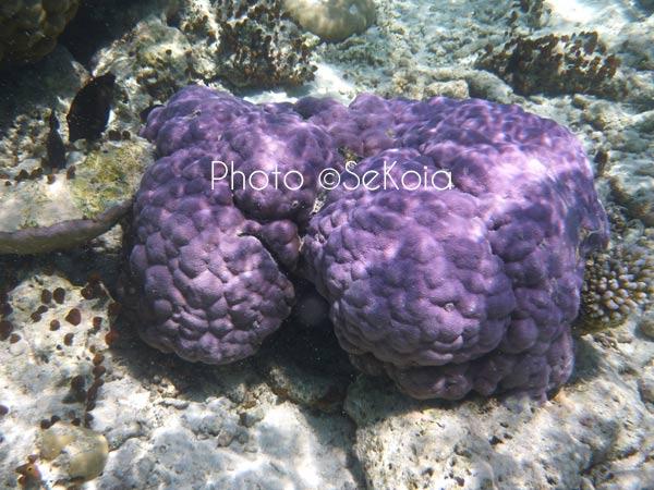 ©sekoia-coraux-ocean-indien-028