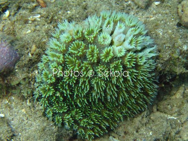 ©sekoia-coraux-ocean-indien-032