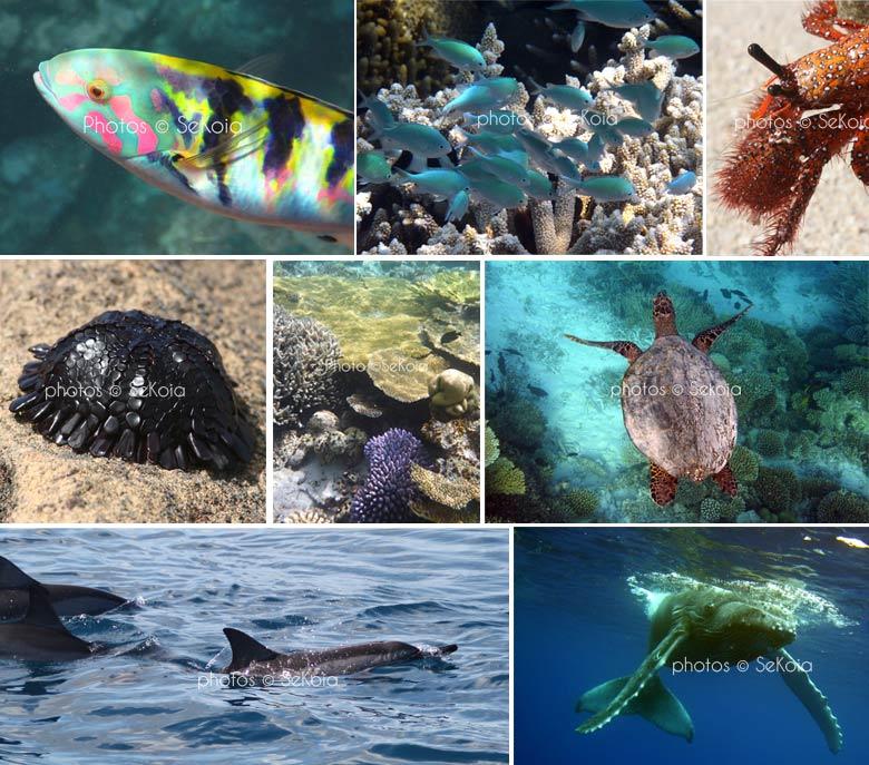 Faune-marine-ocean-indien