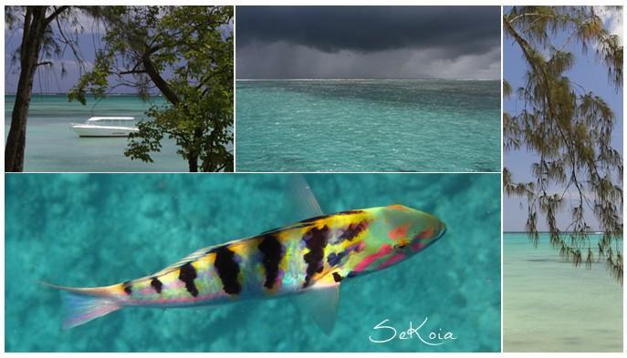Ile-maurice-autrement-201