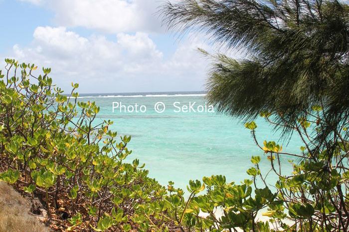 Sekoia-guide-ile-maurice-109