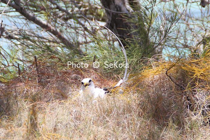 Sekoia-guide-ile-maurice-113