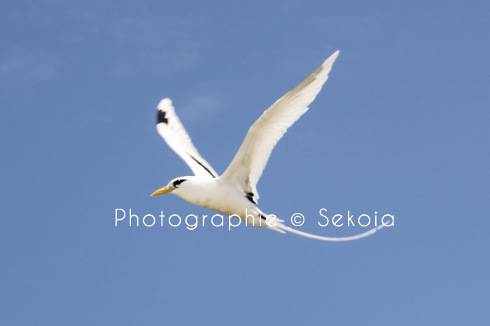 Sekoia-guide-ile-maurice-117