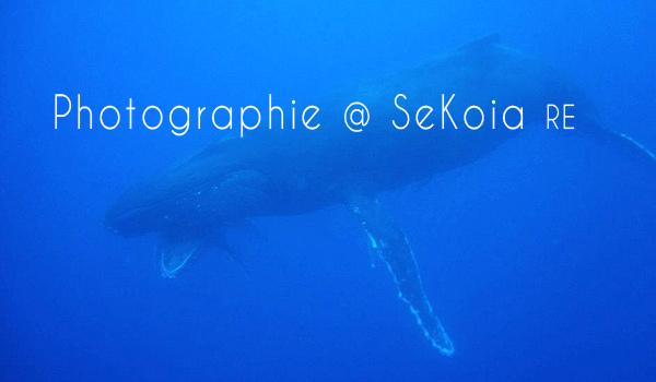 Baleines océan Indien