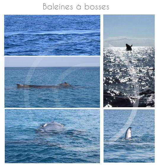 baleines-ile-maurice