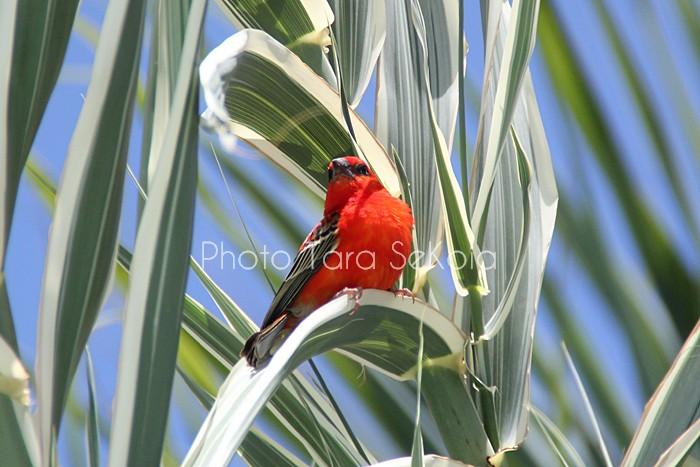 cardinal-ocean-indien-0001