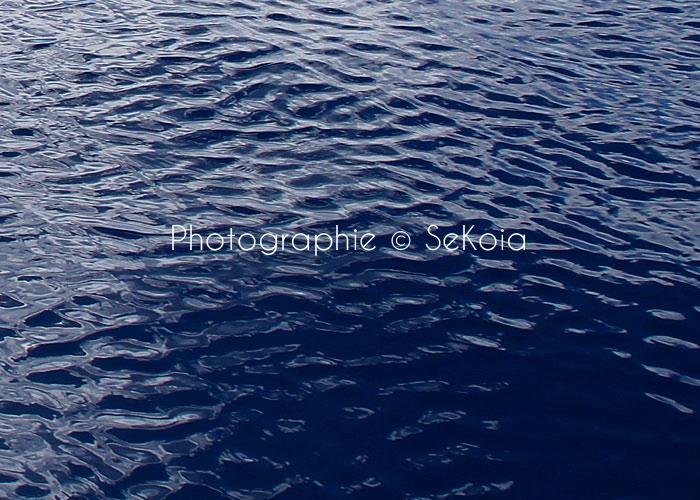 Expo océan Sekoia