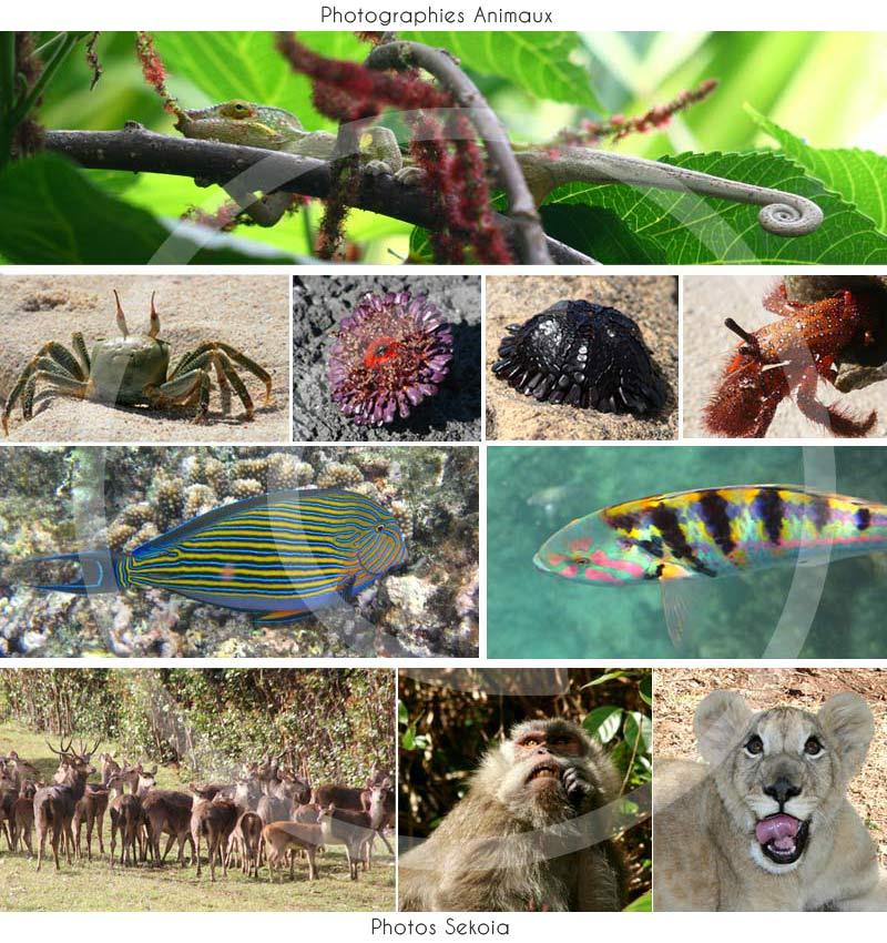 Photos faune océan Indien