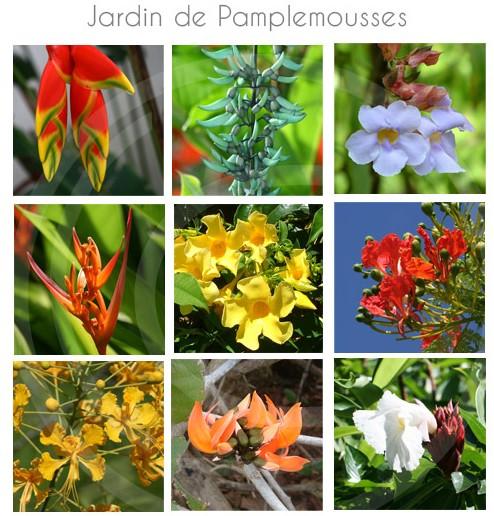 jardin-pamplemousse-ile-maurice-24