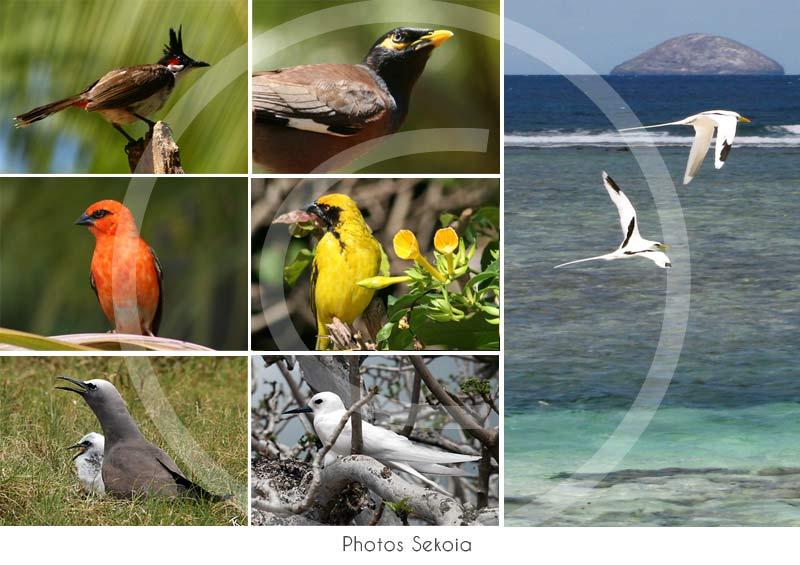 oiseaux-ocean-indien