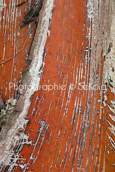 Photo nature tableau décoe-010