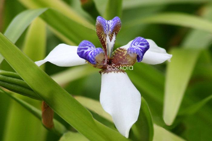 Flore océan Indien