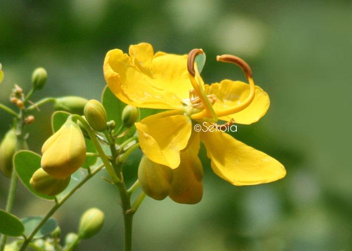 photos-sekoia-fleurs-003
