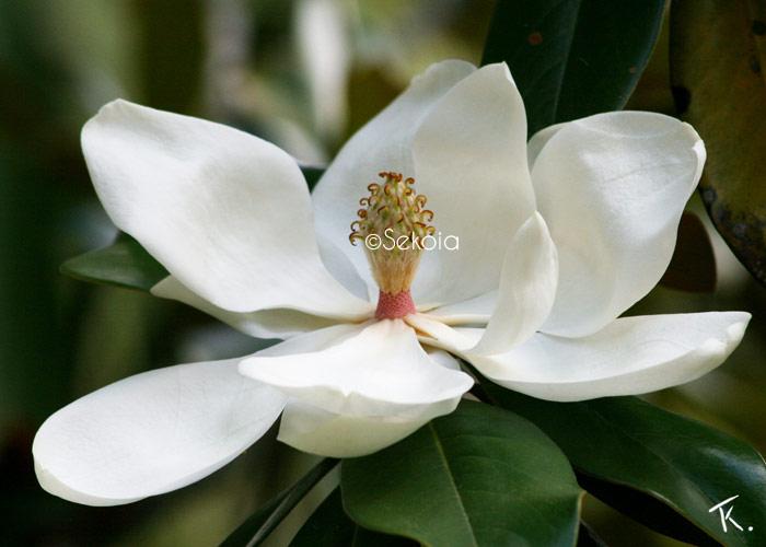 photos-sekoia-fleurs-004