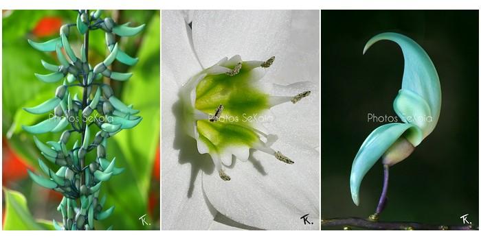 photos-sekoia-fleurs-005