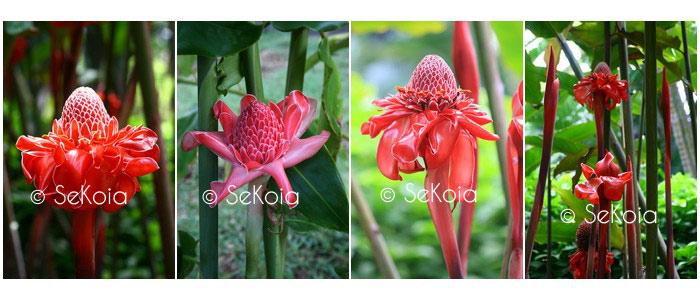 photos-sekoia-fleurs-009